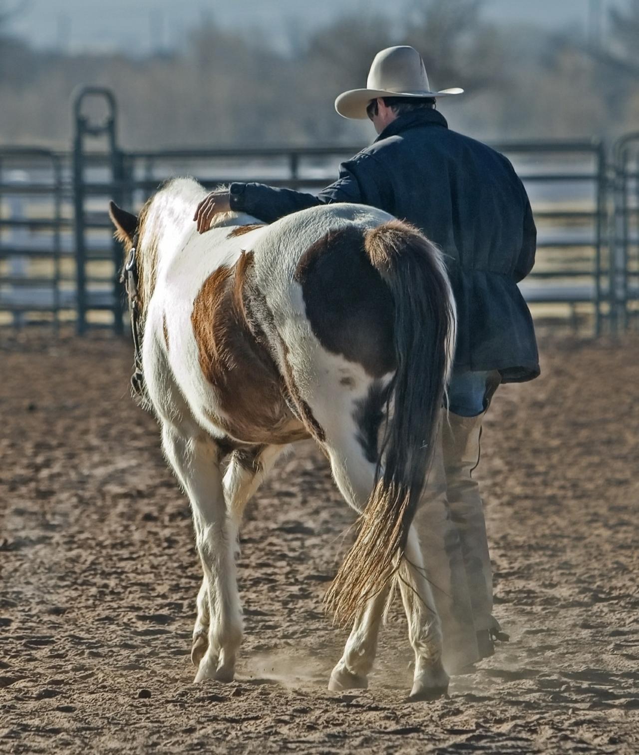 Sportoktató (lovassport) tanfolyam - képzés
