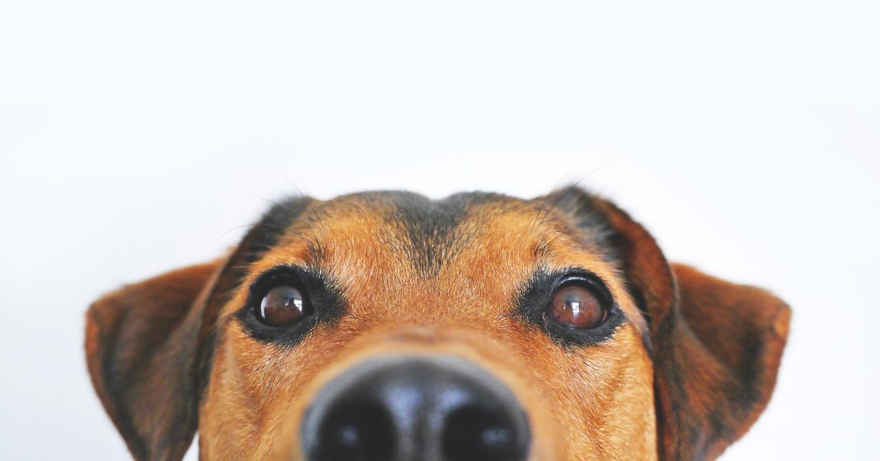 ÁE Kutyakozmetikus tanfolyam