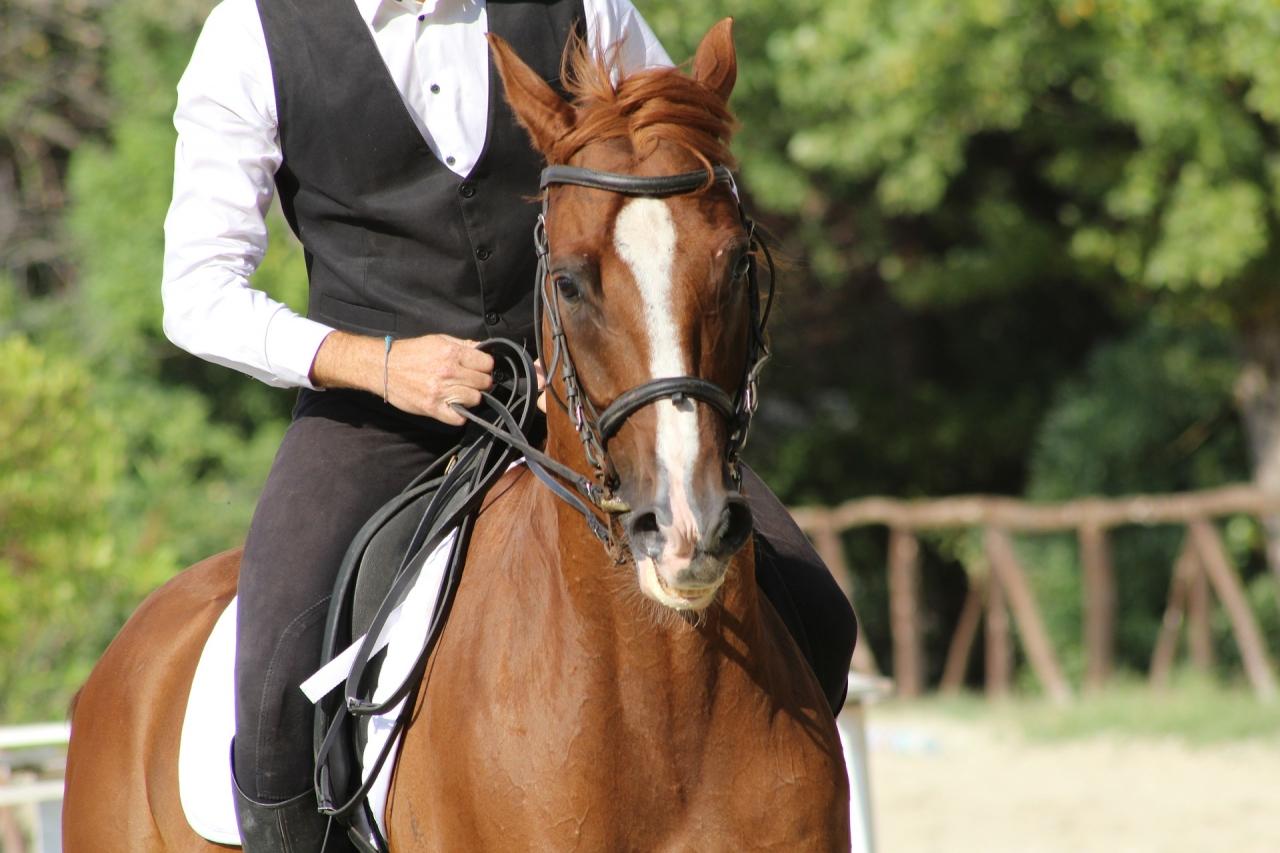 Sportedző (lovassport) tanfolyam - képzés ELINDULT, CSATLAKOZZ!