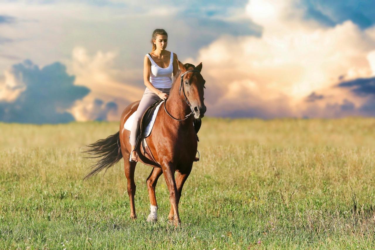 OKJ-s Sportoktató(lovassport)